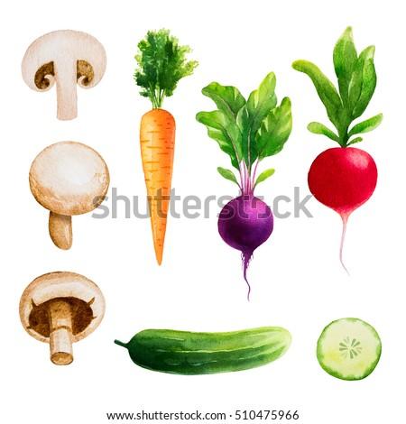 Set of vegetables. Watercolor illustrations. Carrots, cucumbers, radishes, mushrooms, beets