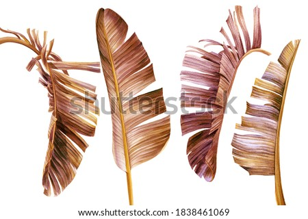 Set of vintage palm leaves on white background, watercolor botanical illustration, tropical clipart