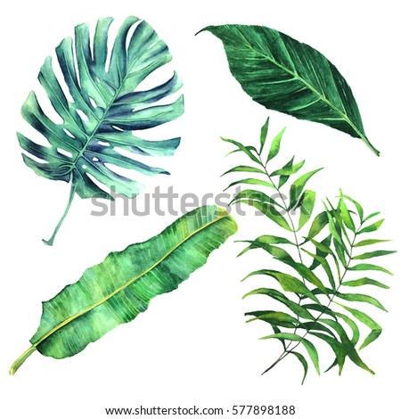 Set of watercolor botanical illustration of tropical palm leaves