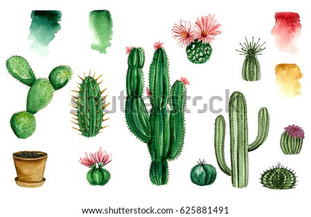 Set of watercolor cactus, succulent, isolated watercolor illustration on white Natural watercolor design elements, botanical collection