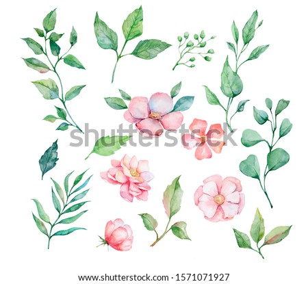 Set of watercolor floral elements, flowers, leaves, peonies for greeting cards, invitations, weddings. Wildflowers, herbs, leaves and branches, illustration isolated on white background. Botanical