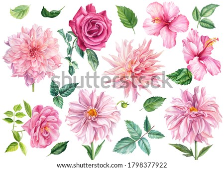 Set of watercolor flowers and leaves, pink dahlia, rose, hibiscus, isolated white background, botanical illustration