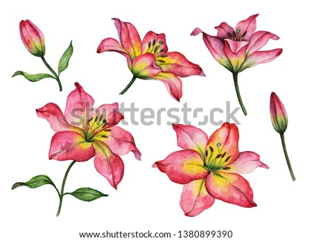 Set of watercolor flowers, hand painted illustration of red lilies, bright floral elements isolated on a white background.