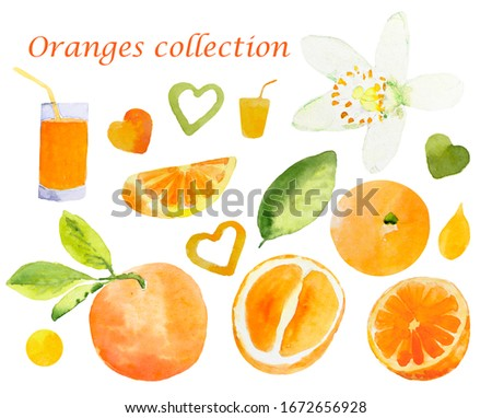 Set of watercolor illustrations of oranges. Hand painted elements: whole orange with leaves, cut orange, orange juice in a glass and orange flower isolated on white background for your design