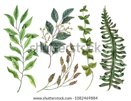 Set of watercolor leaves, hand drawn illustration of floral elements isolated on a white background, can be used for greeting cards and invitations.