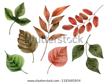 Set of watercolor leaves, hand painted illustration of floral elements isolated on a white background.