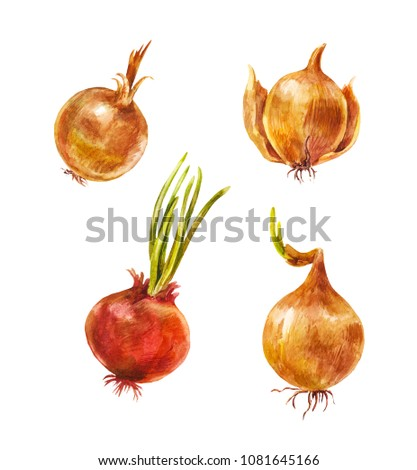 Set of watercolor onion isolated on white