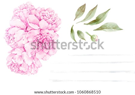 Set of watercolor peony flower isolated on white background. Hand-drawn illustration.