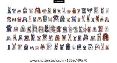 Set of watercolor portraits of 92 dog breeds ストックフォト ©