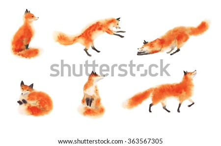 Set of watercolor red fluffy foxes in motion on white. Sitting fox, sleeping fox, playing fox, jumping fox, going foxy. Hand drawn illustration.