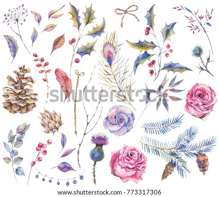 Set of watercolor vintage roses, thistles, wildflowers, twigs, spruce branches, berries and leaves. Floral nature collection isolated on white background,