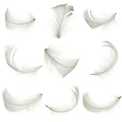 Set of white feather, isolated.