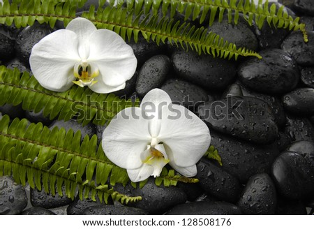 Set of White orchid with green fern on pebbles