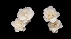 Set of White rose flowers with clipping path. Top view, Flat lay. Beautiful composition of two white rose flower isolated on black background. Naturе element for design to Valentines Day, mothers day