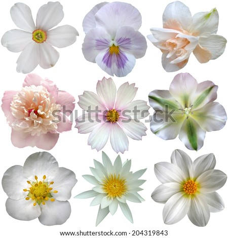 Set of white spring  flowers