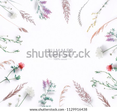 Set of wild flowers, herbs grass and twigs, field plants, color floral elements, beautiful decorative natural circular composition isolated on white background, macro, copy space, flat lay, top view.