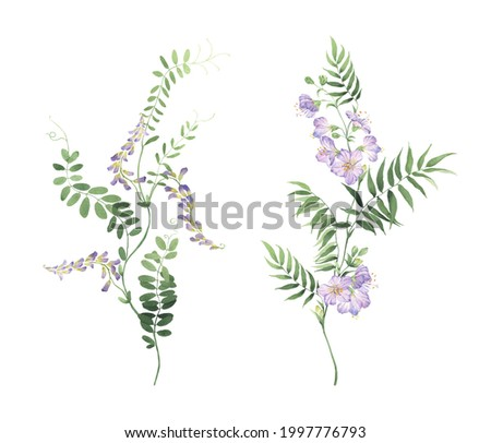 Set of wild plants with small purple flowers and delicate green leaves, watercolor beautiful branches isolated on white background for your decors, invitation, greeting card or wallpapers, textile. Photo stock ©