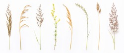 Set of wild ripe herbs grass and twigs, natural field plants, color floral elements, beautiful decorative floral composition isolated on white background, macro, flat lay, top view.