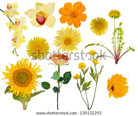 set of yellow flowers isolated on white background