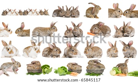 set of young brown sitting rabbit bunny with long ears isolated on white
