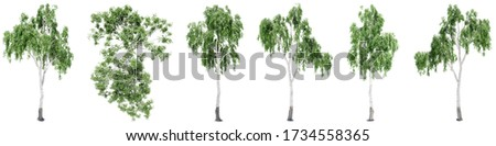 Set or collection of green birch trees isolated on white background for nature, ecology and conservation, strength and endurance, force and life Photo stock ©