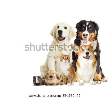set pet on a white background - Shutterstock ID 591932429