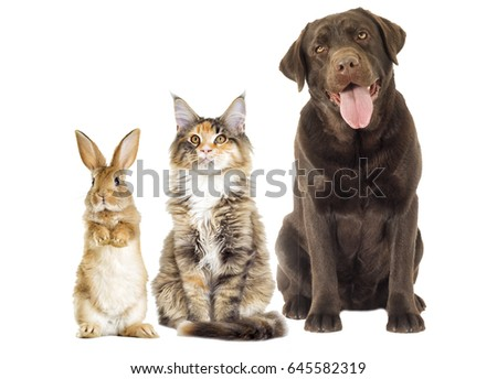 set pet on a white background #645582319