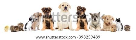 Shutterstock set pets