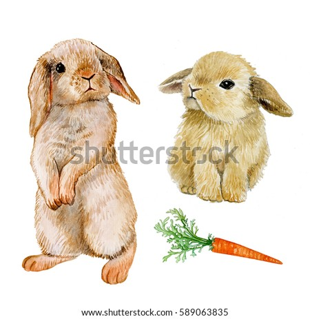 set rabbit with carrot, watercolor draw  animal