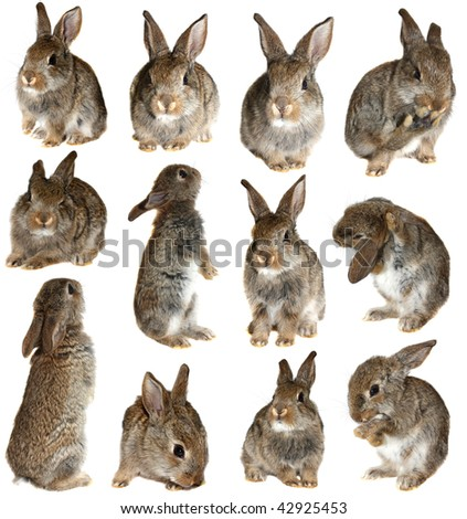set rabbits on a white background, is isolated.