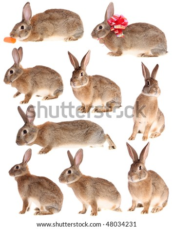 set, rabbits, on a white background, is isolated.