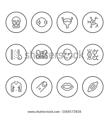 Set round line icons of human organs isolated on white