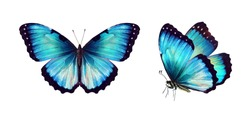 Set two beautiful blue turquoise tropical butterflies with wings spread and in flight isolated on white background, close-up macro.