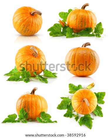 set vegetable pumpkins with green leaves isolated on white background