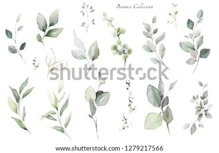 Set watercolor elements -  herbs, leaf. collection, eucalyptus.  illustration isolated on white background,  leaf. Botanic