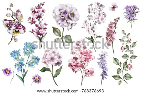 Set watercolor elements of garden flowers. collection   branches of flowers, Botanic  illustration isolated on white background.
