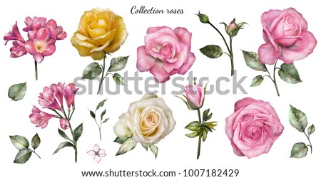 Set watercolor elements of roses, collection garden pink, yellow flowers, leaves, branches, Botanic  illustration isolated on white background.  bud of flowers