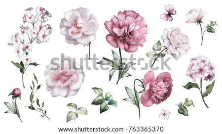 Set watercolor elements of roses, peonies collection garden pink flowers, leaves, branches, Botanic  illustration isolated on white background.  bud of flowers