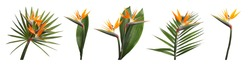 Set with beautiful Bird of Paradise tropical flowers and green leaves on white background. Banner design
