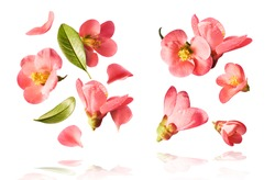 set with  beautiful spring pink flowers flying in the air isolated on the white background. Levitation conception. High resolution image