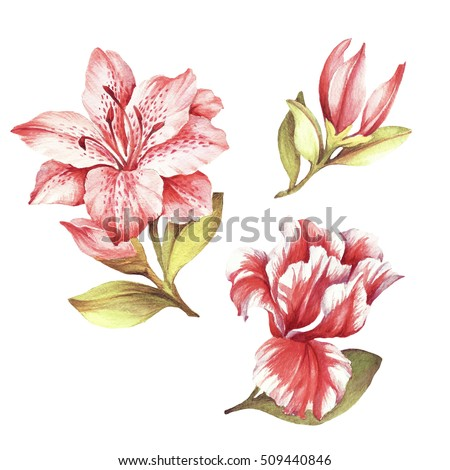 Shutterstock Set with blooming lilies. Hand draw watercolor illustration.