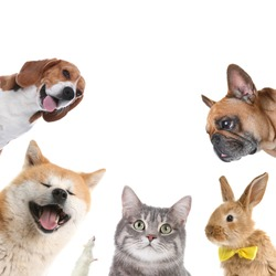 Set with different cute pets on white background