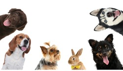 Set with different cute pets on white background. Banner design