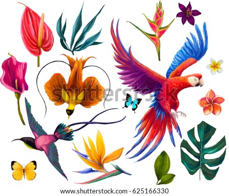 set with exotic birds and flowers and butterfly