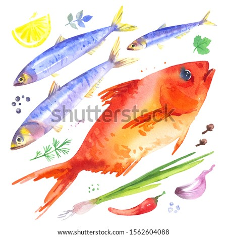 Set with f anchovies and red sea bass fish,onion, garlic, lemon, chilli pepper and herbs. Watercolor illustration of seafood dinner