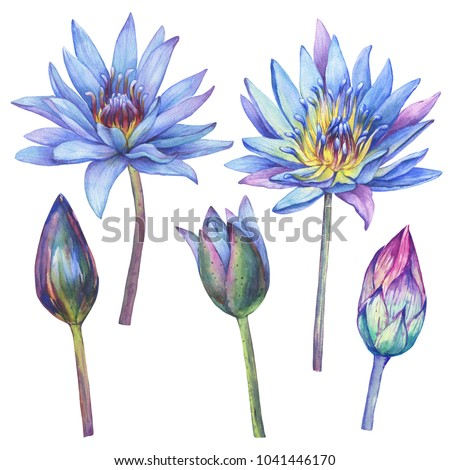 Set with flowers blue Egyptian lotus (Nymphaea caerulea). Watercolor hand drawn painting illustration isolated on white background.