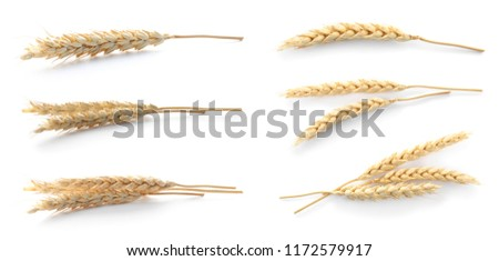 Set with spikelets on white background. Cereal grains #1172579917