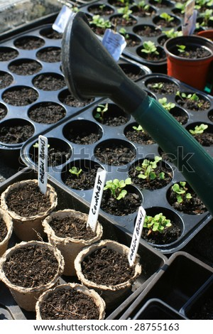Sets of recycled plastic seedling trays and paper pots containing organically grown vegetables.