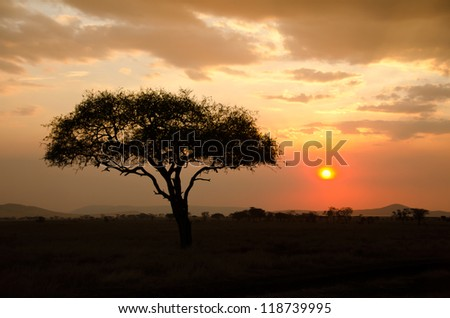 Setting Sun shinning with single Acacia tree in Africa. Beautiful scenery of sunrise / sunset in Serengeti National Park