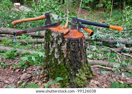 Sevearl hatchets stuck in a tree stump